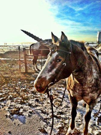unicorn horn horse