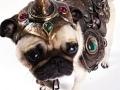 Pug armor