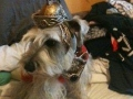 Ben Hur dog armor